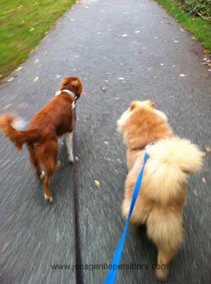 WalkingDogs